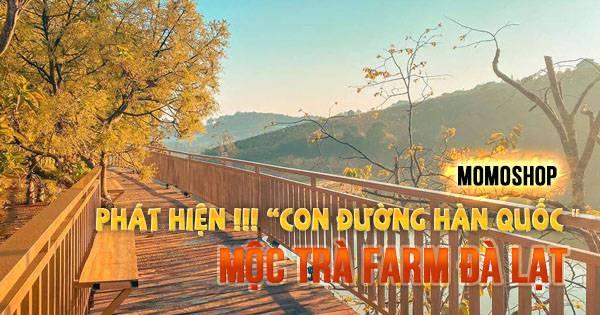 """Phát hiện !!! Mộc Trà Farm """"CON ĐƯỜNG HÀN QUỐC """"ngay Đà Lạt"""
