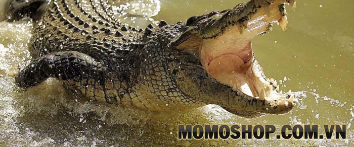 Da cá sấu thật là như thế nào?